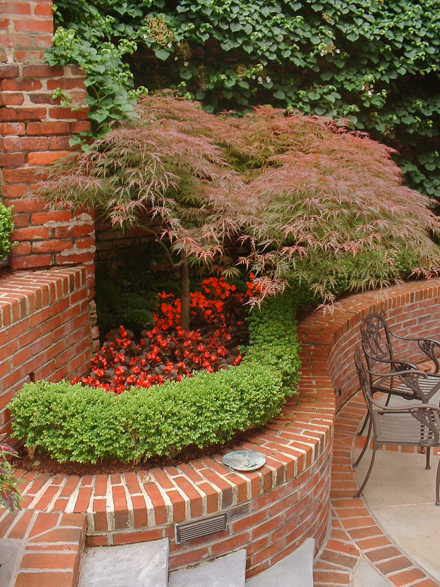 Georgetown and Capitol Hill Gardens | 7 | A Japanese maple fits this ...