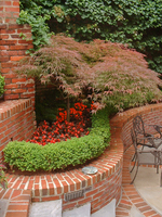 Small corner spaces in your garden need not be dark and boring.