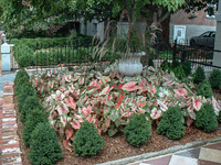A raised front garden  of boxwood and caladiums livens the sidewalk.