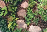Stepping stones and shade plantings in a small front garden.
