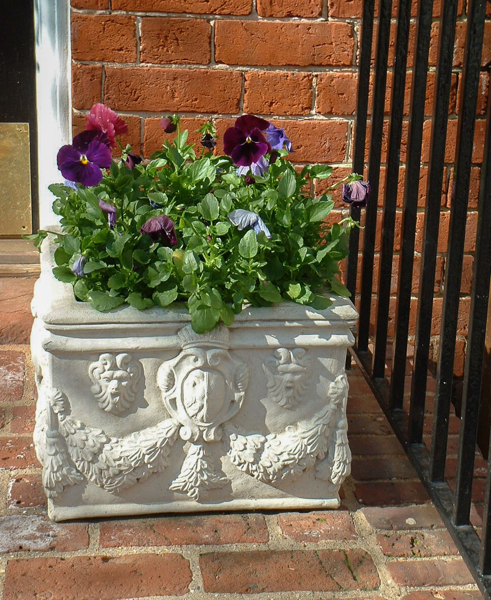 A simple planting of pansies in spring. : Annuals : CITYSCAPES® Landscaping Inc.