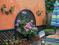 A brightly-colored wall needs strong colors in the plantings.