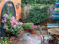 A pocket patio garden with clematis and roses in bloom.