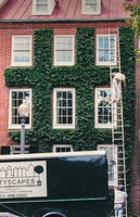 Carefully clipping ivy on the facade of a townhouse.