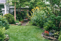 A welcoming front yard in a suburban Silver Spring garden.