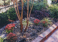 Xeriscape gardens are water-wise and can be very textural and interesting.
