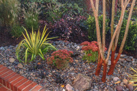 This xeriscape planting works well in a narrow space.