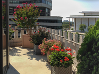 Gorgeous annuals, shrubs and roses soften this large balcony while adding lots of color.