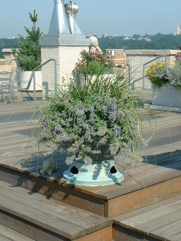 Carefully placed planters allows open space for entertaining. : Rooftop and Balcony Gardens : CITYSCAPES® Landscaping Inc.
